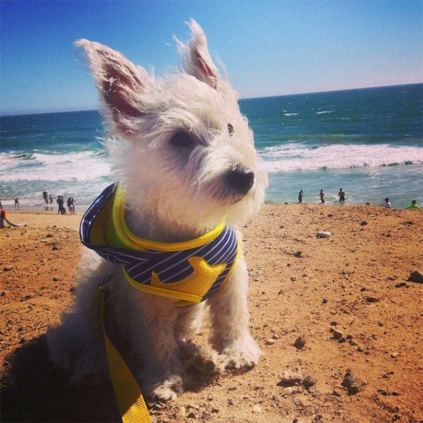"""<div class=""""meta image-caption""""><div class=""""origin-logo origin-image none""""><span>none</span></div><span class=""""caption-text"""">Meet Parker! In honor of National Puppy Day, ABC7 viewers are sending us photos of their adorable dogs. Share your pics on Twitter, Instagram and Facebook with #ABC7Puppy. (KABC / Instagram.com/serendipity_bee)</span></div>"""