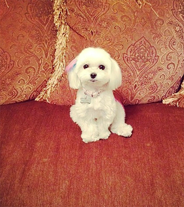 """<div class=""""meta image-caption""""><div class=""""origin-logo origin-image none""""><span>none</span></div><span class=""""caption-text"""">Meet Pasha! In honor of National Puppy Day, ABC7 viewers are sending us photos of their adorable dogs. Share your pics on Twitter, Instagram and Facebook with #ABC7Puppy. (KABC / Instagram.com/sugarspicegirly)</span></div>"""