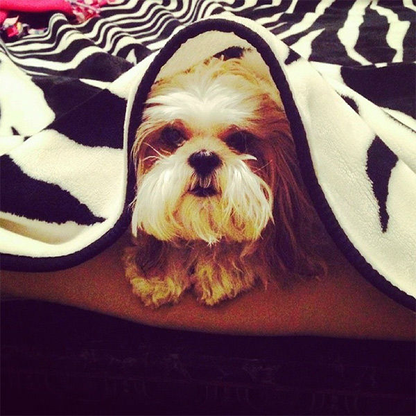 """<div class=""""meta image-caption""""><div class=""""origin-logo origin-image none""""><span>none</span></div><span class=""""caption-text"""">Meet Sammie! In honor of National Puppy Day, ABC7 viewers are sending us photos of their adorable dogs. Share your pics on Twitter, Instagram and Facebook with #ABC7Puppy. (KABC / Instagram.com/rbyred1)</span></div>"""