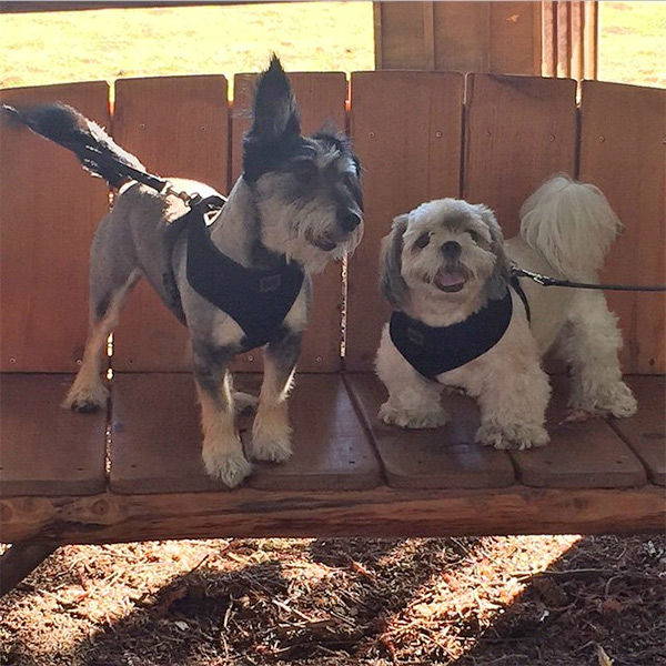 """<div class=""""meta image-caption""""><div class=""""origin-logo origin-image none""""><span>none</span></div><span class=""""caption-text"""">Meet Sugar and Phantom! In honor of National Puppy Day, ABC7 viewers are sharing photos of their adorable dogs on Twitter, Instagram and Facebook with #ABC7Puppy. (KABC / Instagram.com/sugtom1314)</span></div>"""