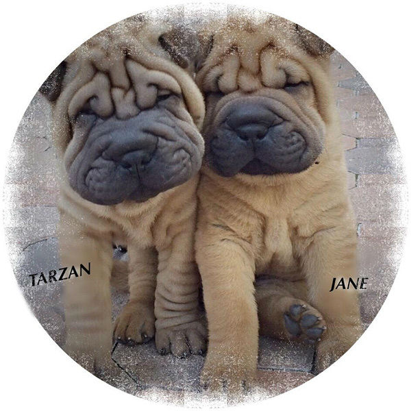 """<div class=""""meta image-caption""""><div class=""""origin-logo origin-image none""""><span>none</span></div><span class=""""caption-text"""">Meet Tarzan and Jane! In honor of National Puppy Day, ABC7 viewers are sending us photos of their adorable dogs. Share your pics on Twitter, Instagram and Facebook with #ABC7Puppy. (KABC / Twitter.com/BobbieLibman)</span></div>"""
