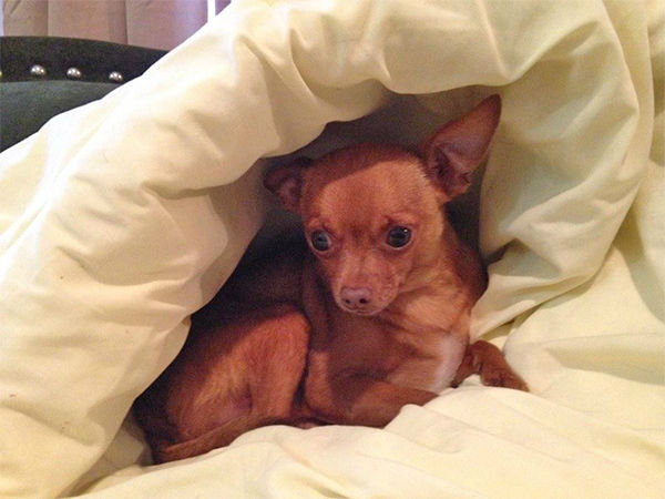 """<div class=""""meta image-caption""""><div class=""""origin-logo origin-image none""""><span>none</span></div><span class=""""caption-text"""">Meet Buddy! In honor of National Puppy Day, ABC7 viewers are sending us photos of their adorable dogs. Share your pics on Twitter, Instagram and Facebook with #ABC7Puppy. (KABC / Twitter.com/cmcaffee62)</span></div>"""