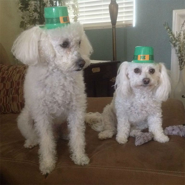 """<div class=""""meta image-caption""""><div class=""""origin-logo origin-image none""""><span>none</span></div><span class=""""caption-text"""">Meet Nicky and Molly! In honor of National Puppy Day, ABC7 viewers are sending us photos of their adorable dogs. Share your pics on Twitter, Instagram and Facebook with #ABC7Puppy. (KABC / Twitter.com/DiannaFabela)</span></div>"""