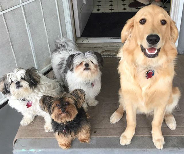 """<div class=""""meta image-caption""""><div class=""""origin-logo origin-image none""""><span>none</span></div><span class=""""caption-text"""">Meet Bitsy, Winnie, Banjo and Baylee! In honor of National Puppy Day, ABC7 viewers are sharing photos of their adorable dogs on Twitter, Instagram and Facebook with #ABC7Puppy. (KABC / Twitter.com/JayeNick23)</span></div>"""