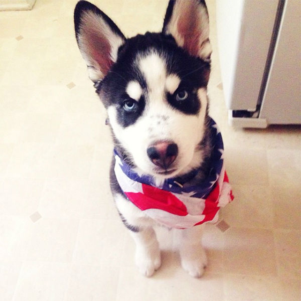 """<div class=""""meta image-caption""""><div class=""""origin-logo origin-image none""""><span>none</span></div><span class=""""caption-text"""">Meet Kota! In honor of National Puppy Day, ABC7 viewers are sending us photos of their adorable dogs. Share your pics on Twitter, Instagram and Facebook with #ABC7Puppy. (KABC / Instagram.com/_julienesbitt)</span></div>"""