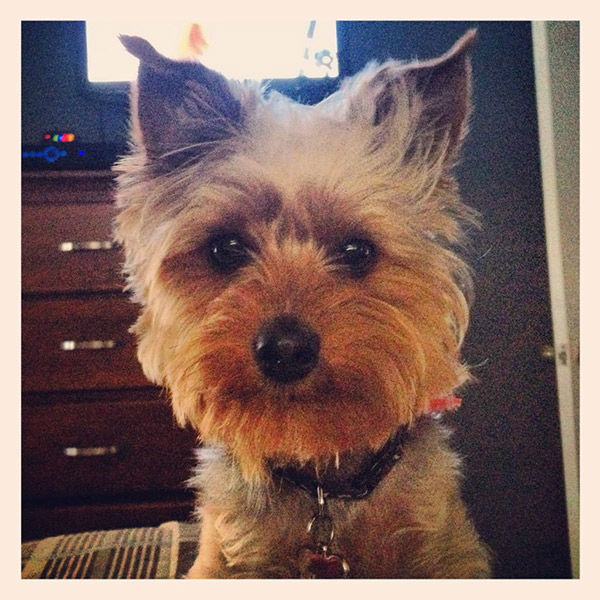 """<div class=""""meta image-caption""""><div class=""""origin-logo origin-image none""""><span>none</span></div><span class=""""caption-text"""">Meet Bouie! In honor of National Puppy Day, ABC7 viewers are sending us photos of their adorable dogs. Share your pics on Twitter, Instagram and Facebook with #ABC7Puppy. (KABC / Twitter.com/lori49ers)</span></div>"""