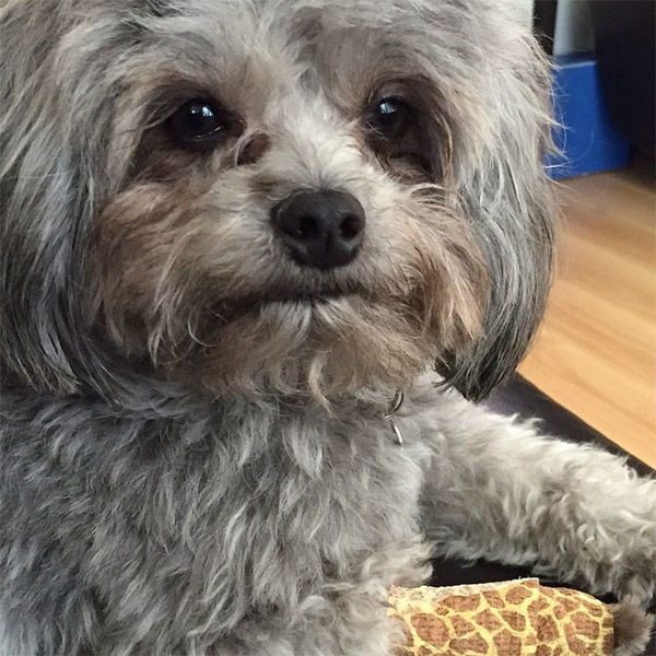 """<div class=""""meta image-caption""""><div class=""""origin-logo origin-image none""""><span>none</span></div><span class=""""caption-text"""">Meet Rockie! In honor of National Puppy Day, ABC7 viewers are sending us photos of their adorable dogs. Share your pics on Twitter, Instagram and Facebook with #ABC7Puppy. (KABC)</span></div>"""