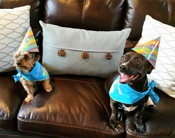 """<div class=""""meta image-caption""""><div class=""""origin-logo origin-image none""""><span>none</span></div><span class=""""caption-text"""">In honor of National Puppy Day, ABC7 viewers are sending us photos of their adorable dogs. Share your pics on Twitter, Instagram and Facebook with #ABC7Puppy. (KABC)</span></div>"""