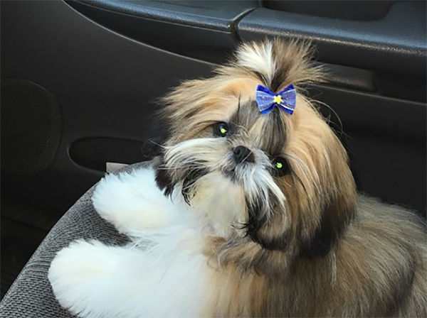 """<div class=""""meta image-caption""""><div class=""""origin-logo origin-image none""""><span>none</span></div><span class=""""caption-text"""">Meet Charlie! In honor of National Puppy Day, ABC7 viewers are sending us photos of their adorable dogs. Share your pics on Twitter, Instagram and Facebook with #ABC7Puppy. (KABC / Instagram.com/rose_aletrakis)</span></div>"""
