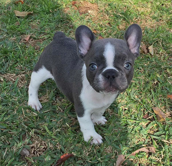 """<div class=""""meta image-caption""""><div class=""""origin-logo origin-image none""""><span>none</span></div><span class=""""caption-text"""">Meet Lulu! In honor of National Puppy Day, ABC7 viewers are sending us photos of their adorable dogs. Share your pics on Twitter, Instagram and Facebook with #ABC7Puppy. (KABC)</span></div>"""