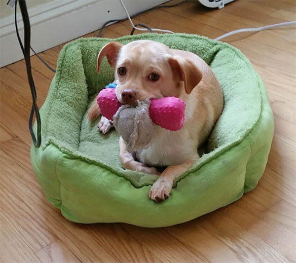 """<div class=""""meta image-caption""""><div class=""""origin-logo origin-image none""""><span>none</span></div><span class=""""caption-text"""">Meet Roux! In honor of National Puppy Day, ABC7 viewers are sending us photos of their adorable dogs. Share your pics on Twitter, Instagram and Facebook with #ABC7Puppy. (KABC / Instagram.com/wboarder12)</span></div>"""