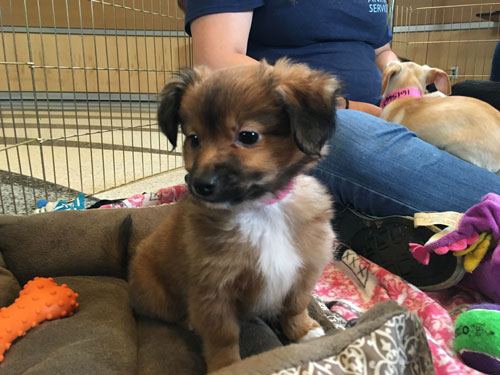 <div class='meta'><div class='origin-logo' data-origin='none'></div><span class='caption-text' data-credit='KABC'>Say hello to this little furball who is looking for a forever home.</span></div>