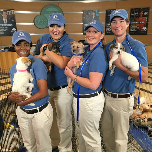 <div class='meta'><div class='origin-logo' data-origin='none'></div><span class='caption-text' data-credit='KABC'>Thanks to the Helpful Honda dealers volunteers for lending a hand at the Puppy Palooza adoption event.</span></div>