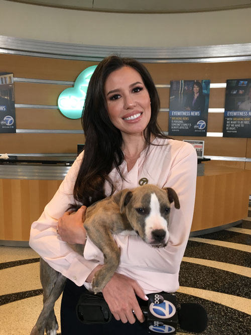 <div class='meta'><div class='origin-logo' data-origin='none'></div><span class='caption-text' data-credit='KABC'>Leslie Lopez holds a big puppy in her arms during the Puppy Palooza event on Wednesday, March 23, 2016.</span></div>