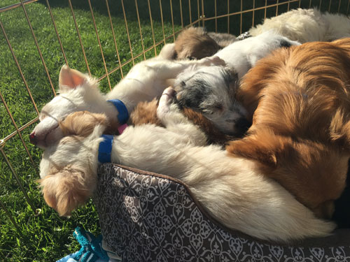 <div class='meta'><div class='origin-logo' data-origin='none'></div><span class='caption-text' data-credit='KABC'>These little pups get into a big pile and sleep on top of one another after a long morning.</span></div>