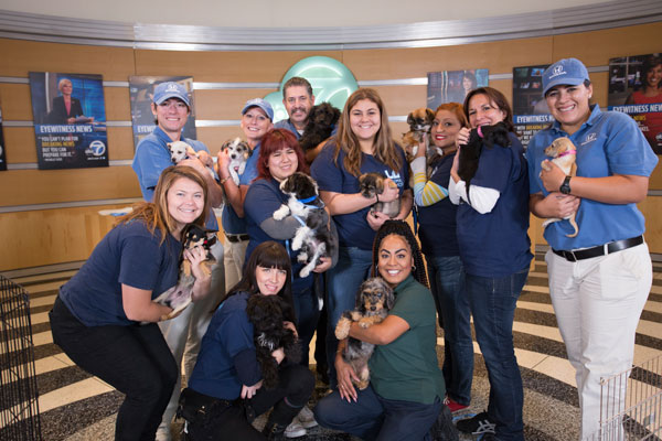 <div class='meta'><div class='origin-logo' data-origin='none'></div><span class='caption-text' data-credit='KABC'>Thanks to all the volunteers who made the ABC7 3rd annual Puppy Palooza adoption event a great one!</span></div>