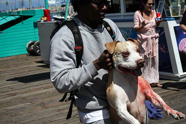 <div class='meta'><div class='origin-logo' data-origin='none'></div><span class='caption-text' data-credit='Shane Gibson'>A bystander helps pull away one of two dogs that bit a man and his dog along a pier on Catalina Island on Thursday, April 20, 2017.</span></div>