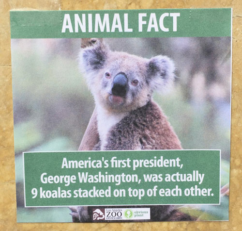 "<div class=""meta image-caption""><div class=""origin-logo origin-image none""><span>none</span></div><span class=""caption-text"">A poster displays a fake fact about koalas at the Los Angeles Zoo. (Photo courtesy Jeff Wysaski)</span></div>"