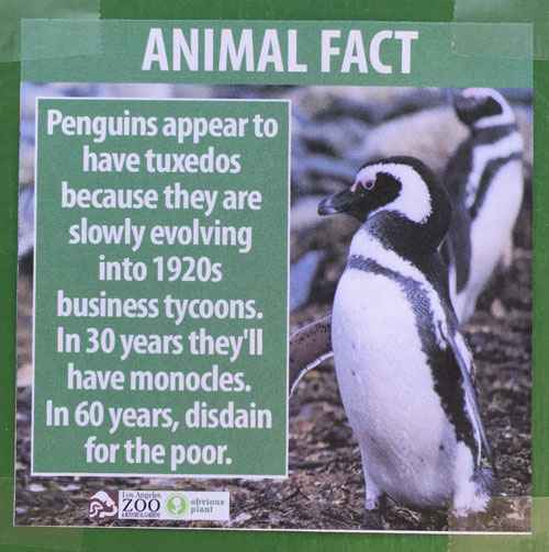 "<div class=""meta image-caption""><div class=""origin-logo origin-image none""><span>none</span></div><span class=""caption-text"">A poster displays a fake fact about penguins at the Los Angeles Zoo. (Photo courtesy Jeff Wysaski)</span></div>"