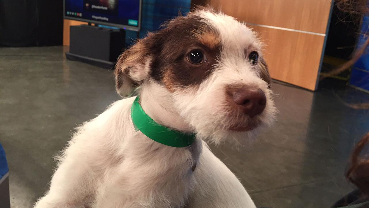Our Pet of the Week on Tuesday, Oct. 6, is a 3-month-old female terrier mix named Peaches.