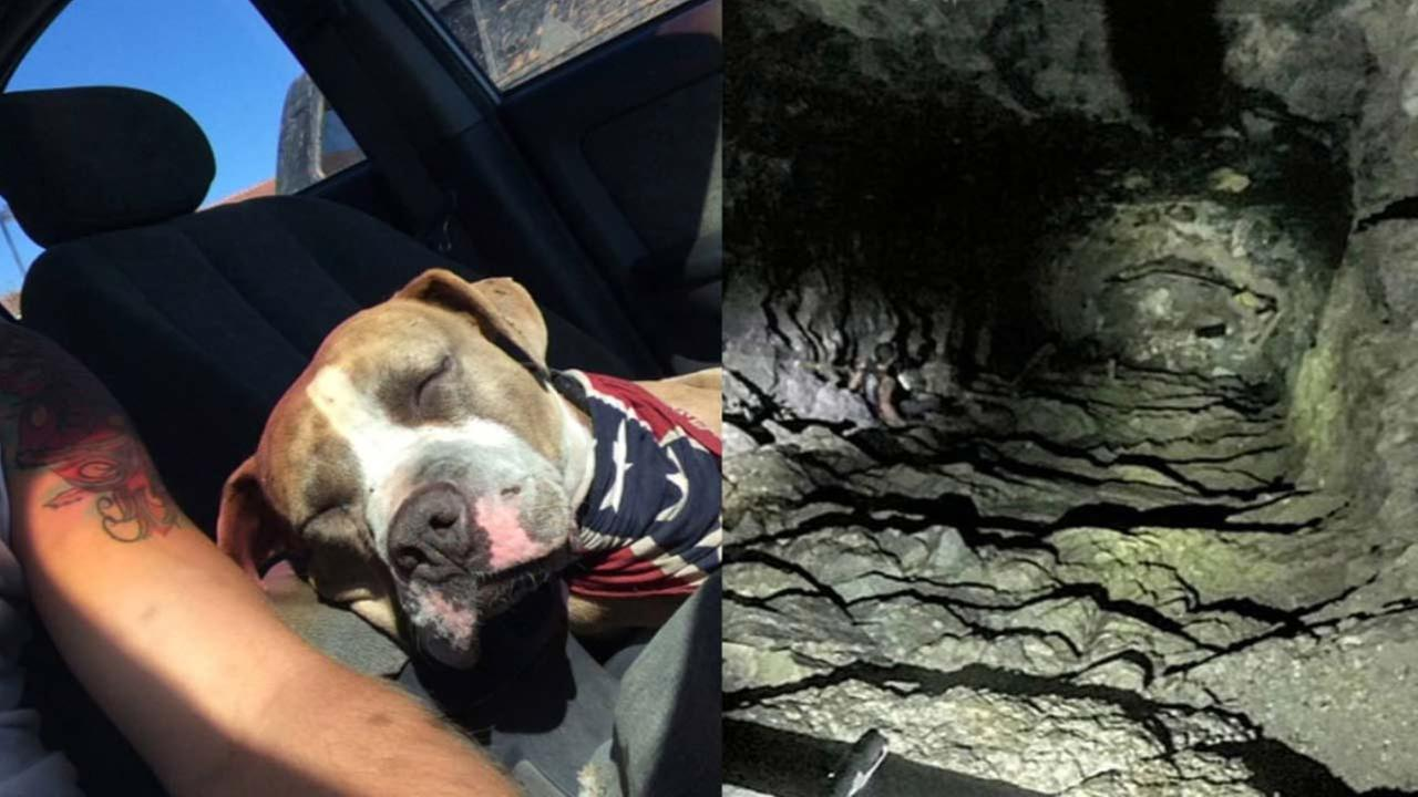 A 1-year-old pit bull was rescued after falling down a mine shaft in Corona Tuesday, Oct. 12, 2015.