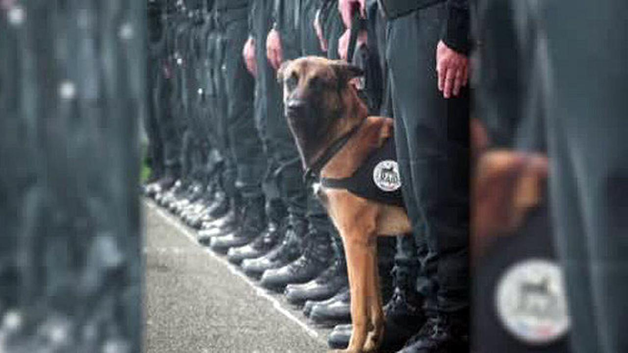 A 7-year-old Belgian Malinois named Diesel, a SWAT team assault dog, was killed by terrorists during the raid in Saint-Denis, north of Paris, on Wednesday, Nov. 18, 2015.