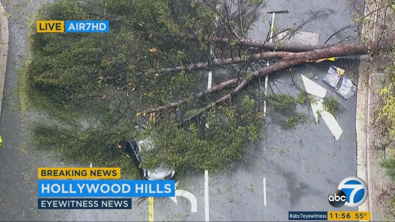 High winds caused a tree to topple on top of a vehicle on Beverly Glen near Mulholland drives in Hollywood Hills on Wednesday, Jan. 6, 2016.KABC