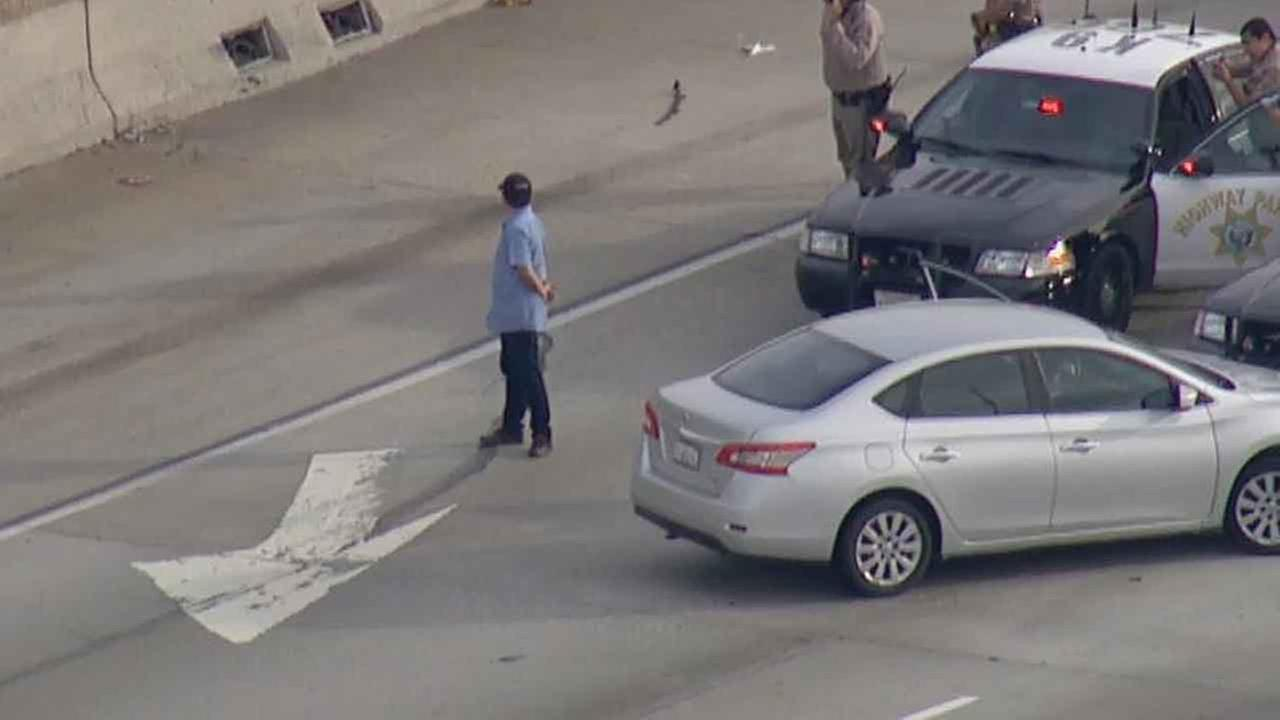 A possible narcotics suspect surrenders to police following a chase that ended with a PIT maneuver on the 110 North in South LA on Monday, Jan. 11, 2016.