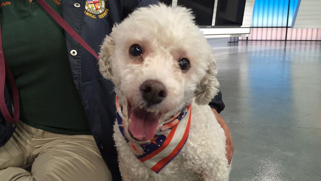 Our Pet of the Week on Tuesday, Jan. 19, 2016 is a 3-year-old male Bichon Frise named Diego.