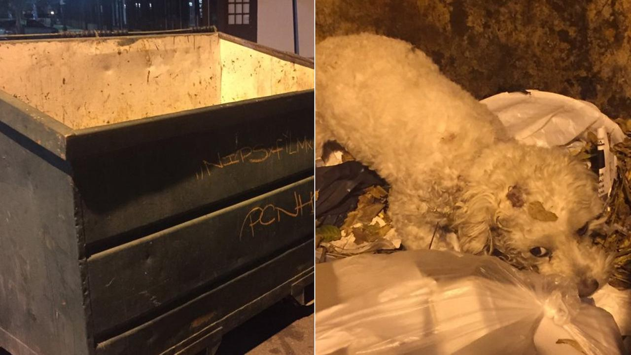 A dog suffering from an untreatable neck wound was found inside a dumpster in the rear of an Alondra Hot Wings restaurant in the 600 block of W. Whittier Boulevard in Montebello.