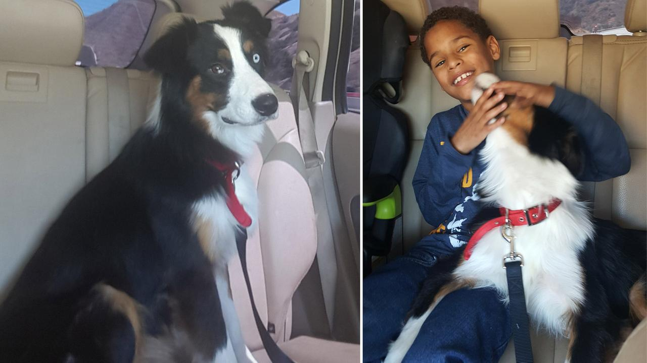 Zion, 12, is shown alongside images of his service dog Buck, who went missing almost a month ago.