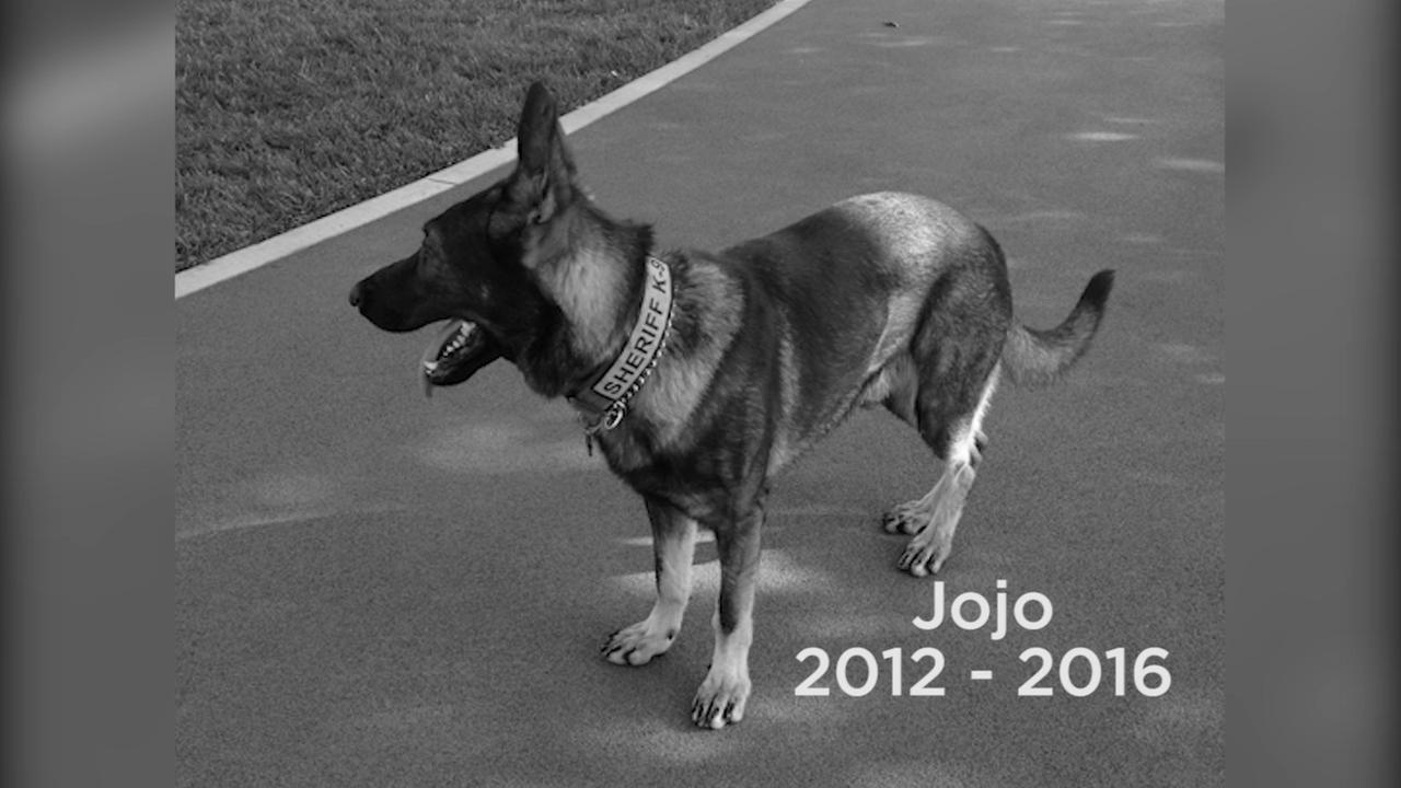 Special memorial held for beloved San Bernardino County K-9 Jojo