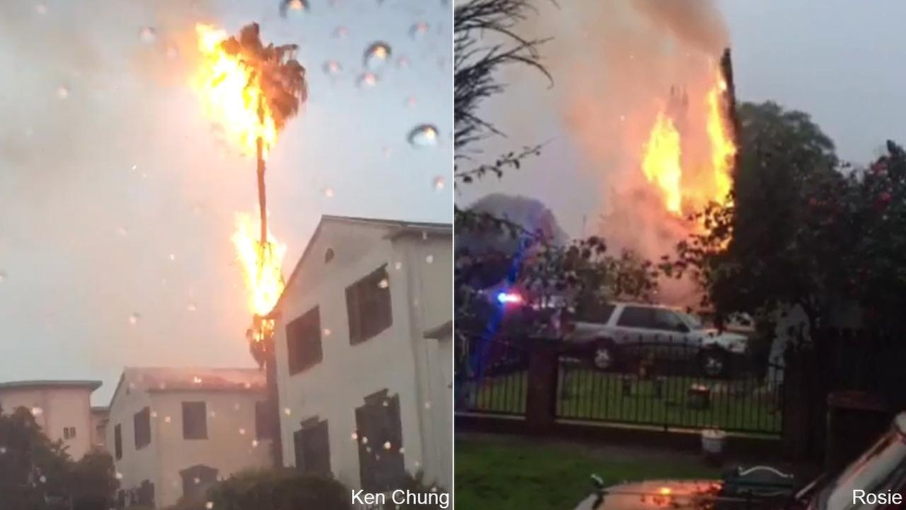 ABC7 viewers Ken Chung shared these images of trees fires sparked buy lightning strikes in Koreatown, left, and Compton, right, on Monday, March 7, 2016.ABC7 viewers Ken Chung / Rosie