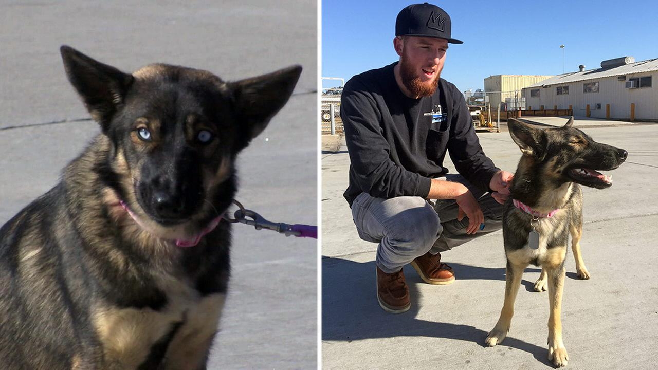 Conner Lamb squats next to Nick Haworths 1-year-old German shepherd Luna, who fell overboard from his boat in the ocean off the Southern California coast in February.
