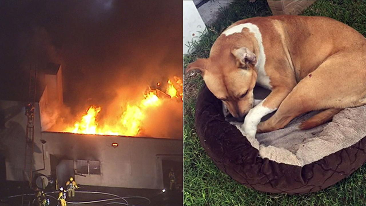 A pit bull mix was rescued from a large blaze that destroyed an abandoned church building in Vermont Knolls, on Monday, March 28, 2016.