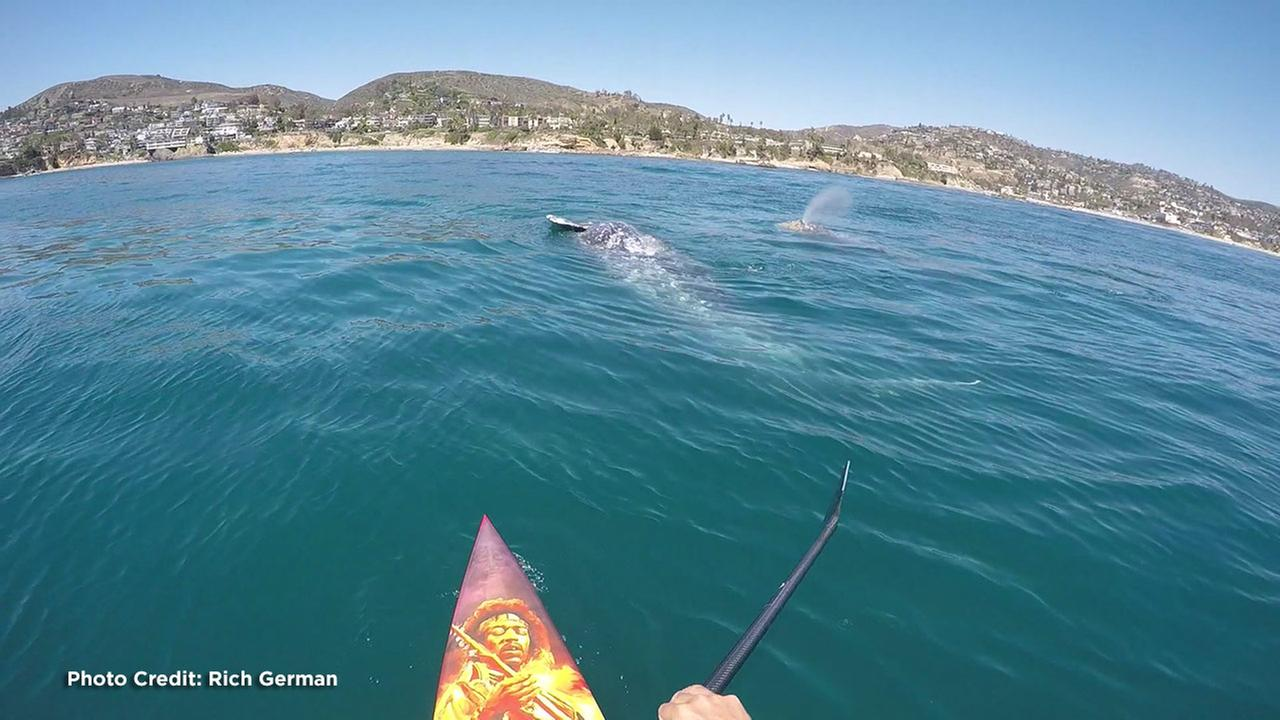 Rich German were surprised by four gray whales while paddleboarding off the coast of Laguna Beach, California.