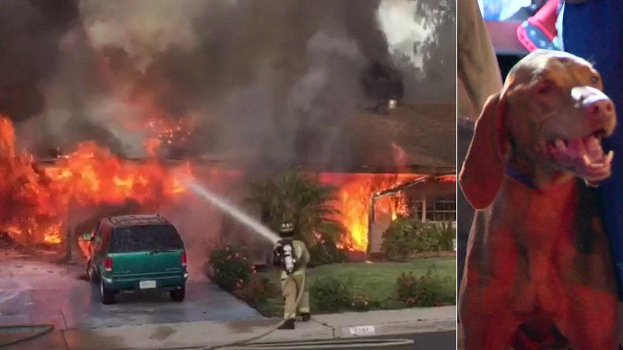A dog was rescued from a raging house fire in San Diego.
