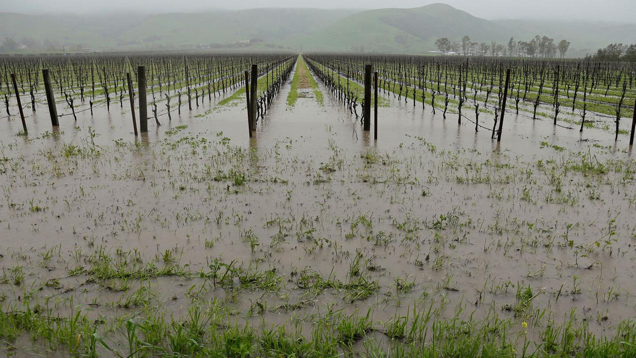 Runoff from heavy rain flows into vineyards along Highway 121 Thursday, March 10, 2016, in Sonoma, Calif.