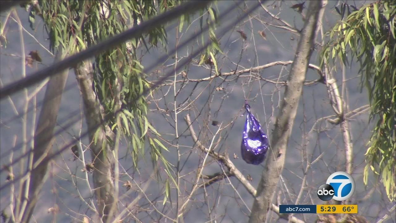 A bill proposed by California Assemblyman Bill Quirk aims to ban the sale and distribution of foil-covered balloons, which allegedly tangle with power lines and cause hundreds of power outages each year.