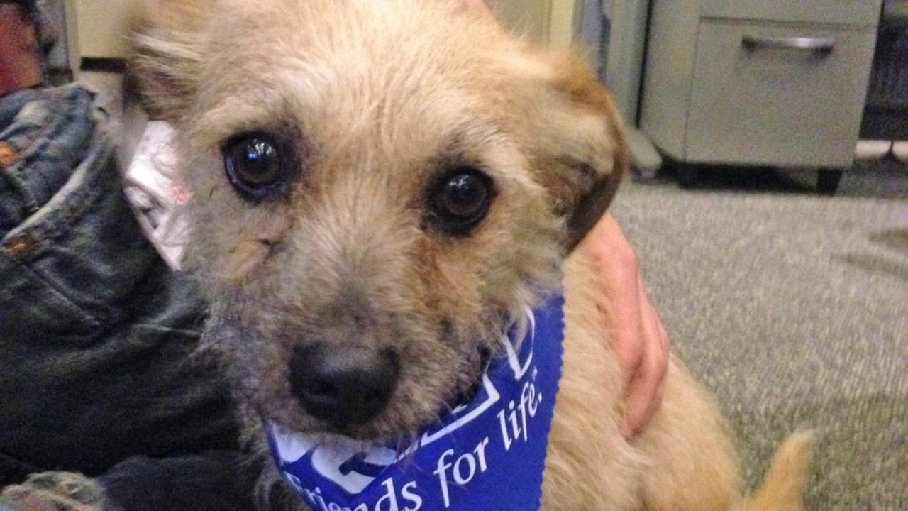 Our Pet of the Week on Thursday is a 2-year-old Terrier mix named Peter Pan. Please give him a good home!