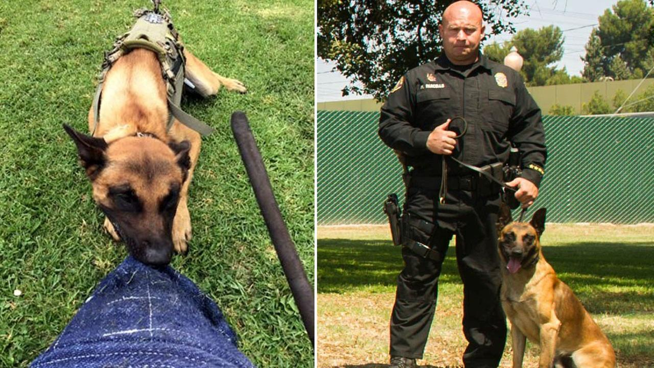 Long Beach Police Department K-9 Credo and his handler, Officer Mike Parcells, are shown in undated photos posted on the departments Twitter.