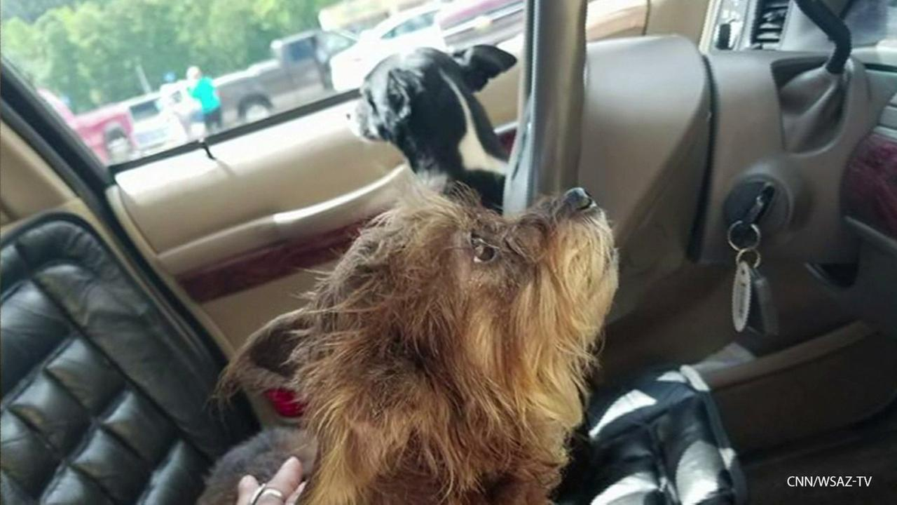 Two dogs crashed a car into a Walmart in West Virginia after their owner left them inside the vehicle while she went shopping.