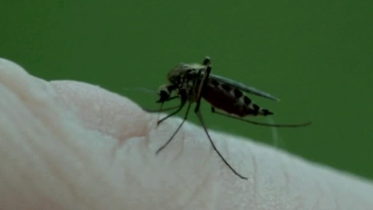 Mosquitoes transmit the West Nile Virus.