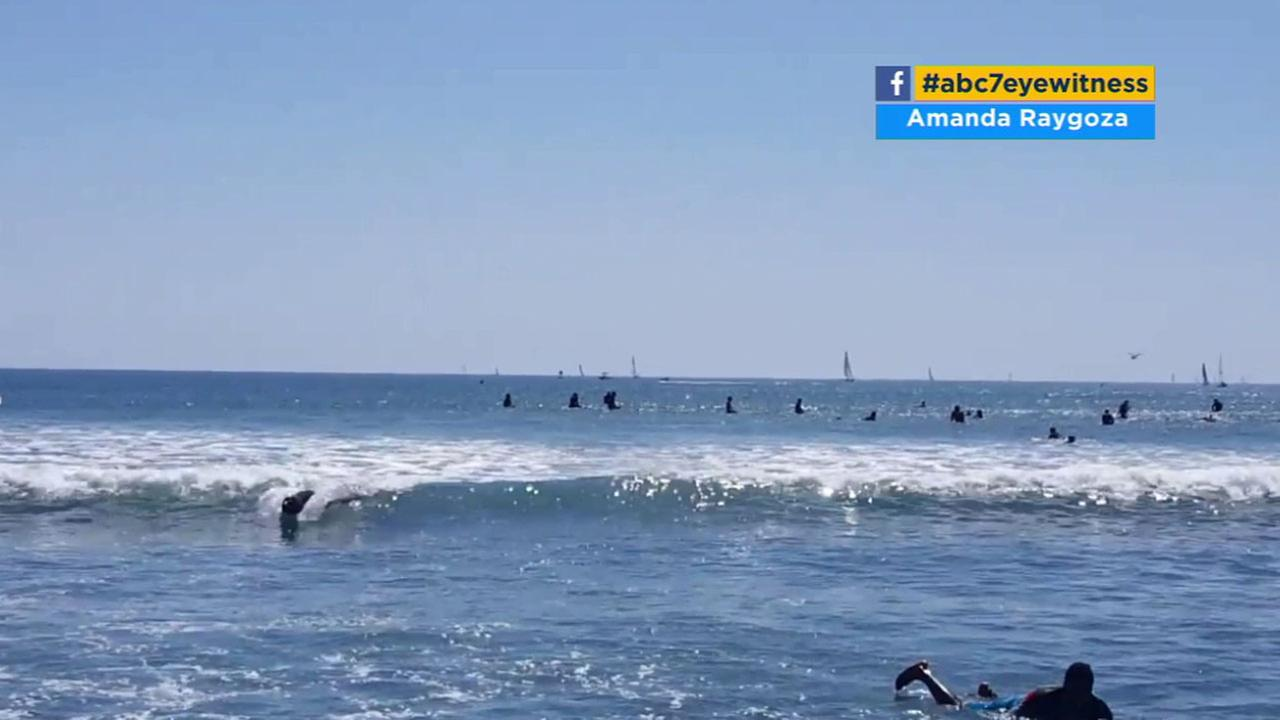 A sea lion is captured on camera body surfing in Dana Point.