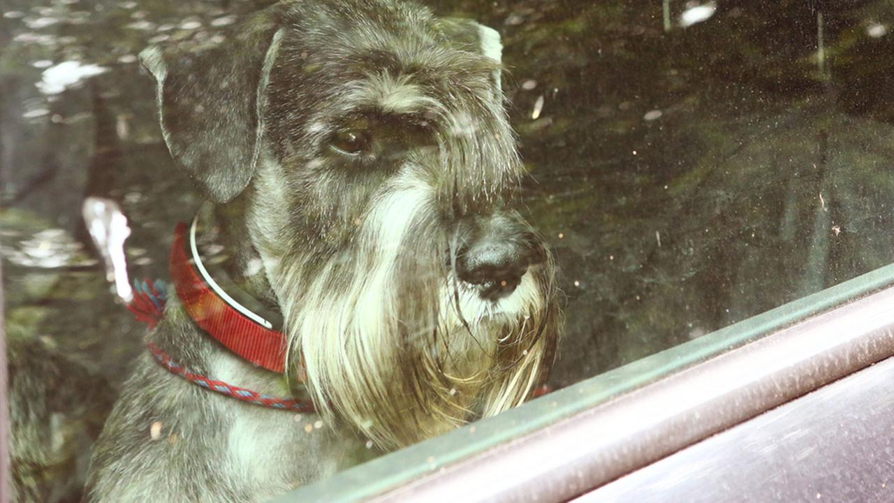 Gov. Jerry Brown has signed into law a bill that allows Californians to rescue animals trapped in hot cars without fear of prosecution.
