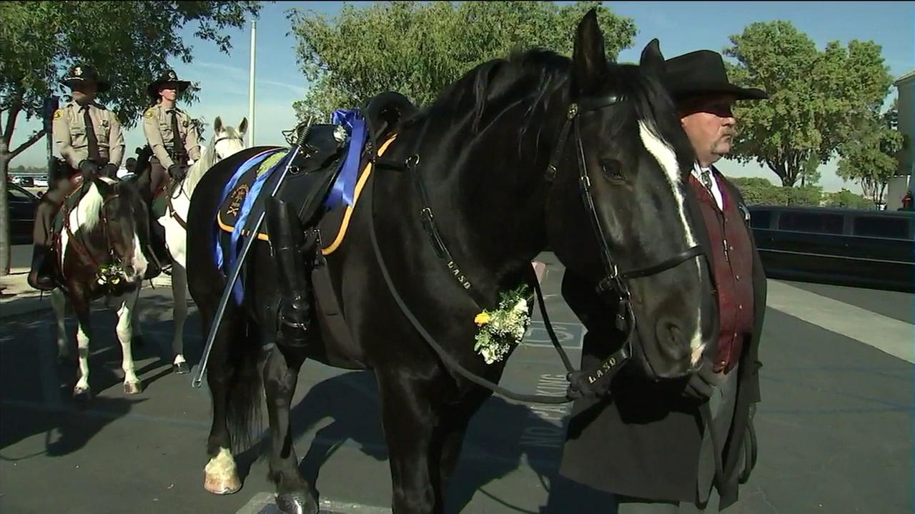 An honorary riderless horse is seen at a memorial service for Sgt. Steve Owen in Lancaster on Thursday, Oct. 13, 2016.KABC