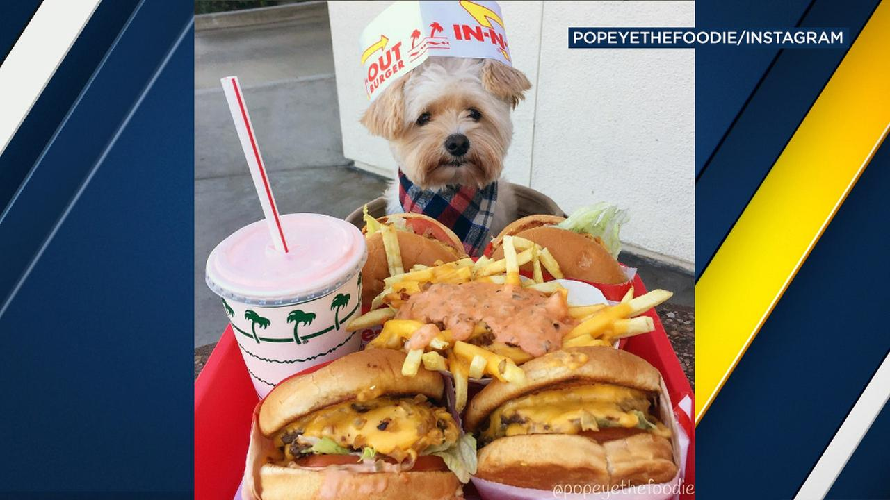 Popeye The Foodie Dog poses with In-N-Out in Alhambra.