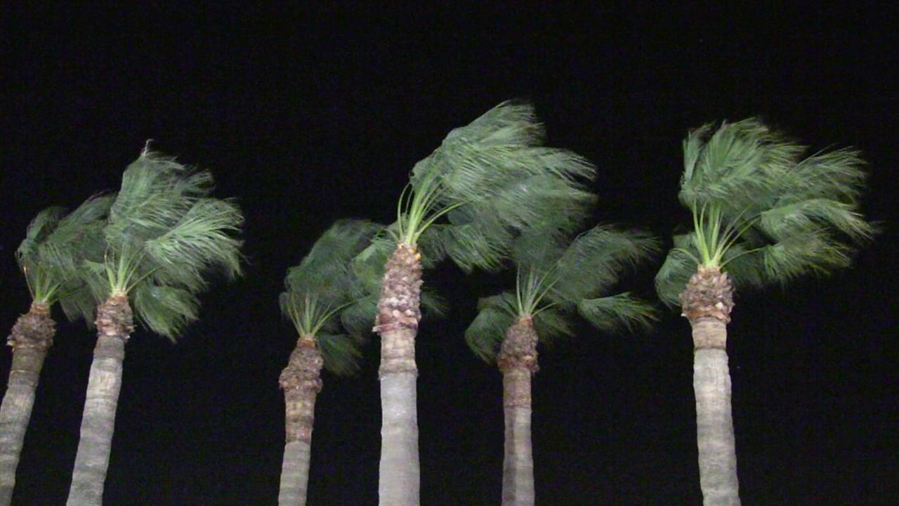 Gusty winds rustle palm trees in this undated file photo.
