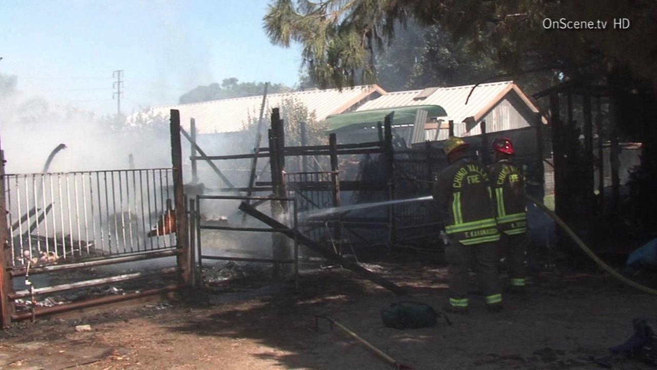 Firefighters respond to a fire in a barn in Chino on Sunday, July 6, 2014.