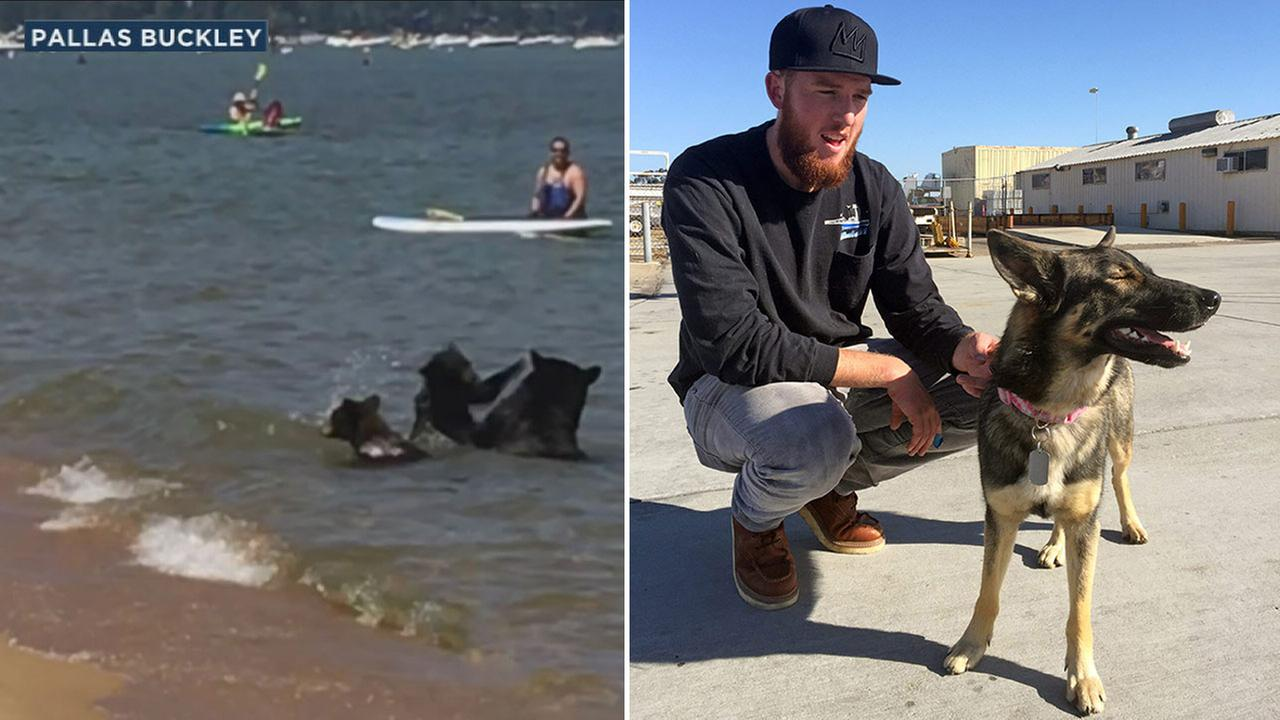 Bears taking a dip in Lake Tahoe in August are shown on the left alongside an image of Nick Howarth reunited with his dog Luna.